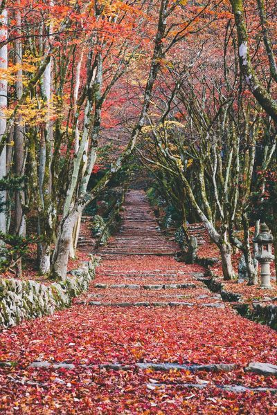 red carpet No People Outdoors Nature Color Of Life Japan Scenery Getting Inspired Sound Of Life EyeEm Best Shots EyeEm Nature Lover EyeEm Gallery Relaxing Peace And Quiet Autumn Color Beauty In Nature Tranquility Japan Photos Autumn Forest