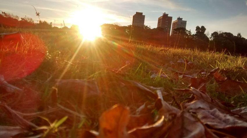 Day Grass Outdoors Plant Scenics Sun Sunlight Sunset