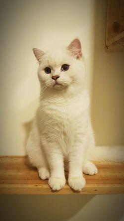 Pets Sitting Portrait Dog Domestic Cat Alertness Feline Looking At Camera