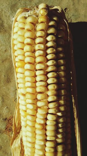 Corn Seeds Yellow