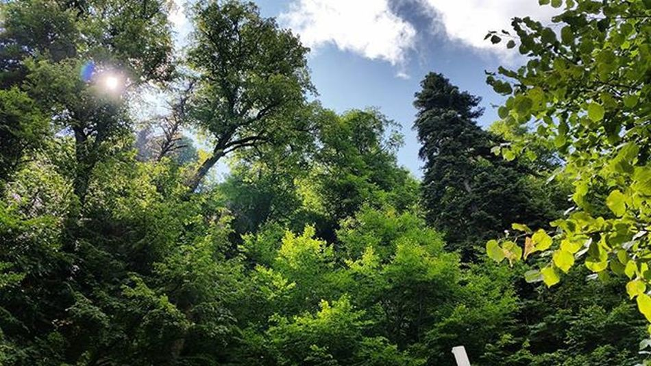 Nofilters Nofilter Doğa Nature Agac Tree Greens Green Sheet Sky Bluesky Uludag Holiday Clouds Blueclouds Bluecloudysky Bluecloudscouture Tranquility Huzur Bursa Uludag