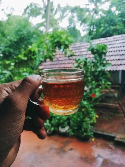 The Week on EyeEm EyeEm Best Shots Tea Rain Tea Time Refreshment Rainy Days Human Hand Tree Drink Drinking Glass Holding Men Sky Close-up Plant