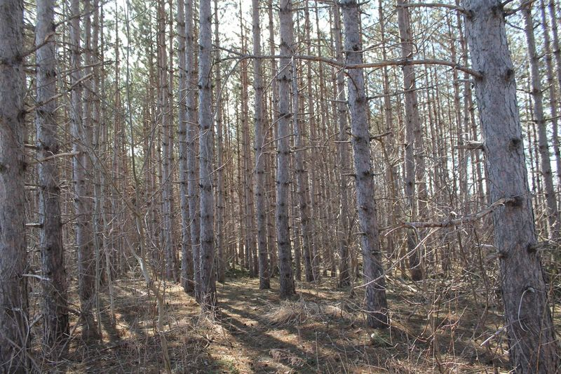 Forest Tree Plant Land WoodLand Nature No People