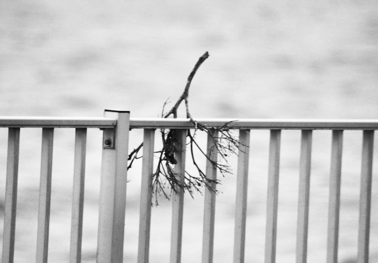 Close-up of dry plant by railing against fence