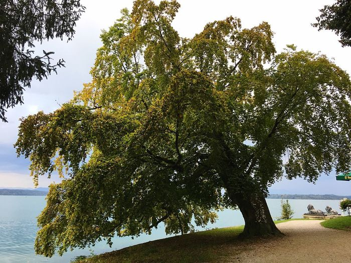 Lake View Plant Tree Beauty In Nature Growth Nature Tranquility No People Water Branch Outdoors Tranquil Scene Non-urban Scene Green Color Land