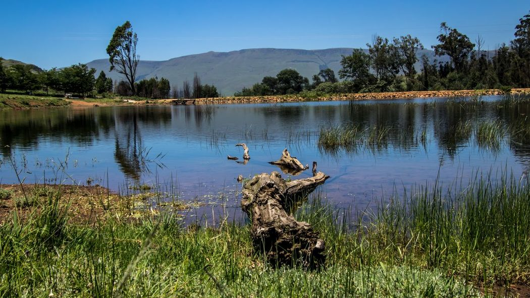 Dam Reflections Reflections In The Water Log Canon80d📷 Canonphotography Tamronlens Tamron18400 Reflection Tree Water Nature Outdoors Landscape Sky Day Grass No People