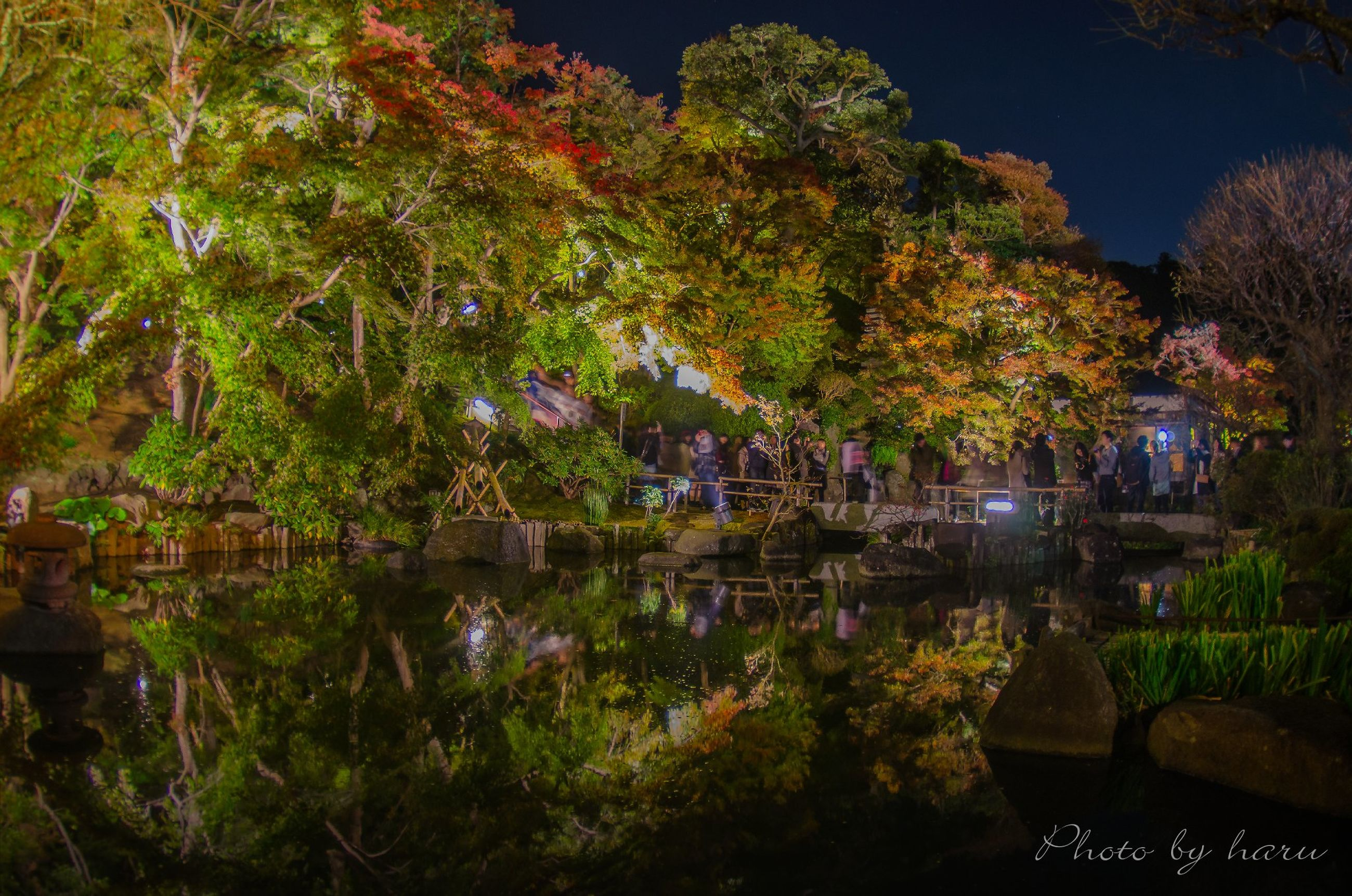 tree, water, growth, reflection, tranquility, nature, lake, beauty in nature, tranquil scene, pond, scenics, built structure, park - man made space, outdoors, clear sky, building exterior, plant, illuminated, night, architecture