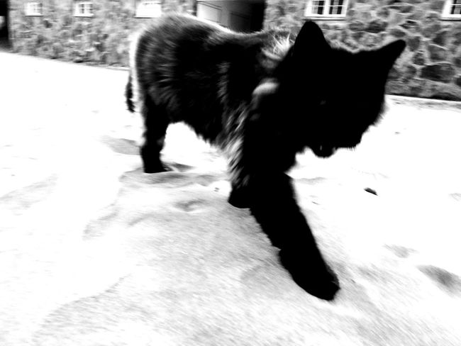 No Eye Blackandwhite One Animal Mammal Animal Themes Cats Of EyeEm Black Color No People GranCanaria Grancanary