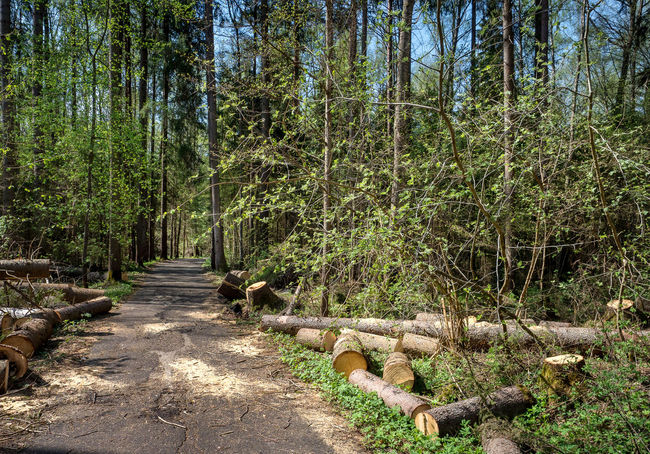 Russia, Moscow, storm, fallen trees Moscow Russia Storm Beauty In Nature Day Diminishing Perspective Direction Environment Footpath Forest Green Color Growth Land Nature No People Non-urban Scene Outdoors Plant Scenics - Nature The Way Forward Tranquil Scene Tranquility Tree Wood WoodLand