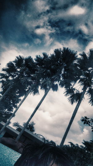 Summer feels Summer Feels Taking Photos Photography Photo Photographer Photographic Memory Photos Around You Nature Nature Photography Blue Palm Palm Trees Sky Sky And Clouds