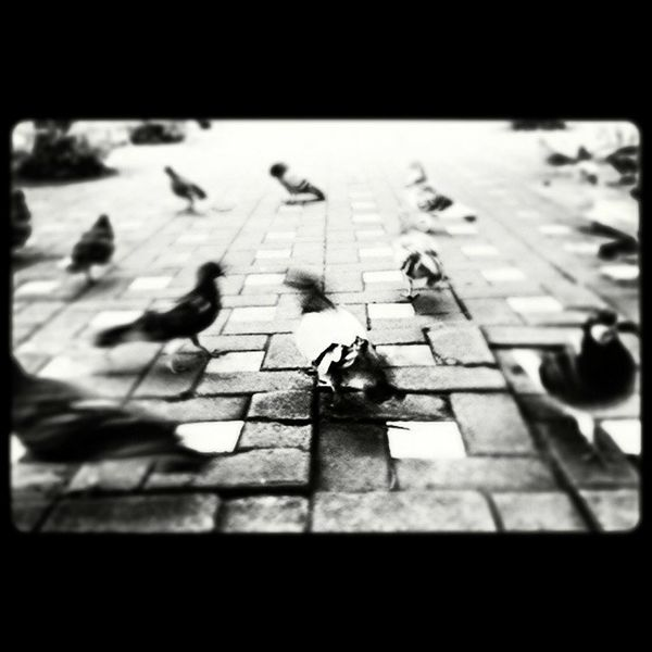 Multiple Layers when it's black they flock Happy :) Blackandwhite Photography Doves