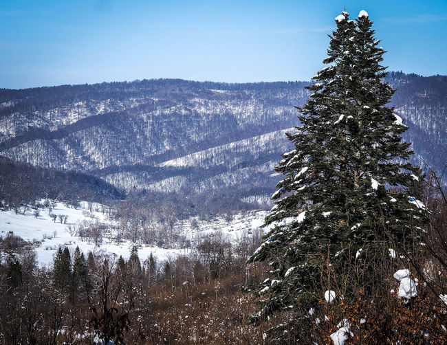 Bieszczady Mountains Beauty In Nature Bieszczady Cold Temperature Coniferous Tree Day Environment Fir Tree Growth Mountain Nature No People Non-urban Scene Outdoors Pine Tree Plant Scenics - Nature Sky Snow Snowcapped Mountain Tranquil Scene Tranquility Tree Winter