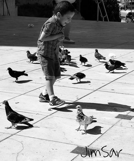Boy Childhood Outdoors Day Pigeons Happyness Playingtime Greece Athens Cityphotography Monochrome Streerphotography P10 Huwaeileica Photography City Sunset Black And White Child Outdoor Photography EyeEmNewHere Eyeemphoto The Week On EyeEm