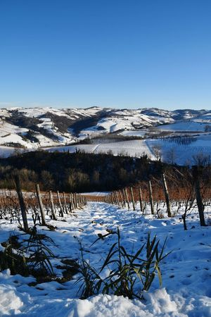 Langhe Landscape Snow Snowed Snowed Hills Tranquility Beauty In Nature Travel Destinations Hills Top Of The Hills Vineyards In Winter Winter Outdoor Blue Sky Travel Rural Scene Cold Temperature Cold Winter ❄⛄ Snowy Hills