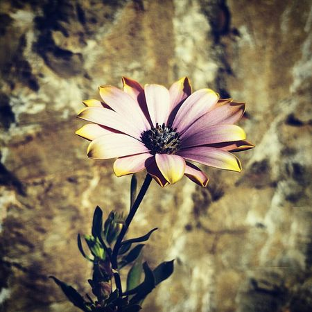 Flower Flowers First Eyeem Photo Instagram Sochi