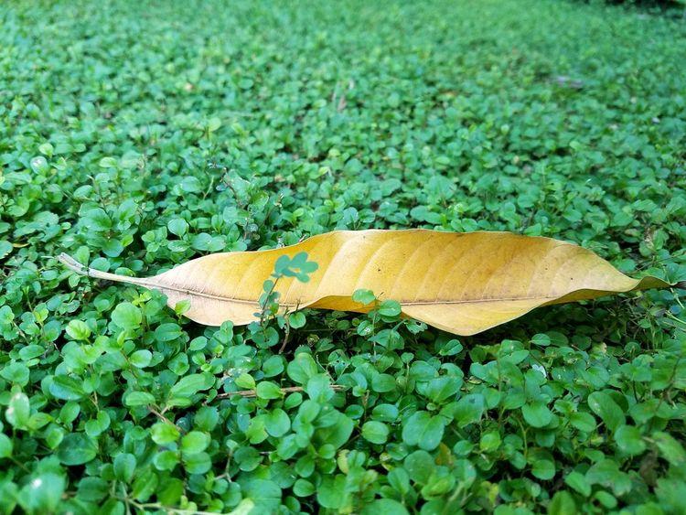 Sola #EyeEm #green #soledad Leaf Close-up Grass Plant