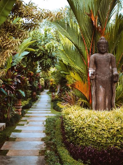 Relax and calm down, weekend is close! Gardening Garden Nature Bali Balinese Asian  Culture Tropical Tropical Paradise Paradise Stone - Object Sculpture Hinduism Buddhism Travel Travel Photography Inspirational Relaxing Moments Tones Colors Of Autumn Travelphoto Landscape EyeEm Nature Lover Tree Palm Tree Statue Sculpture Growing Young Plant EyeEmNewHere A New Beginning