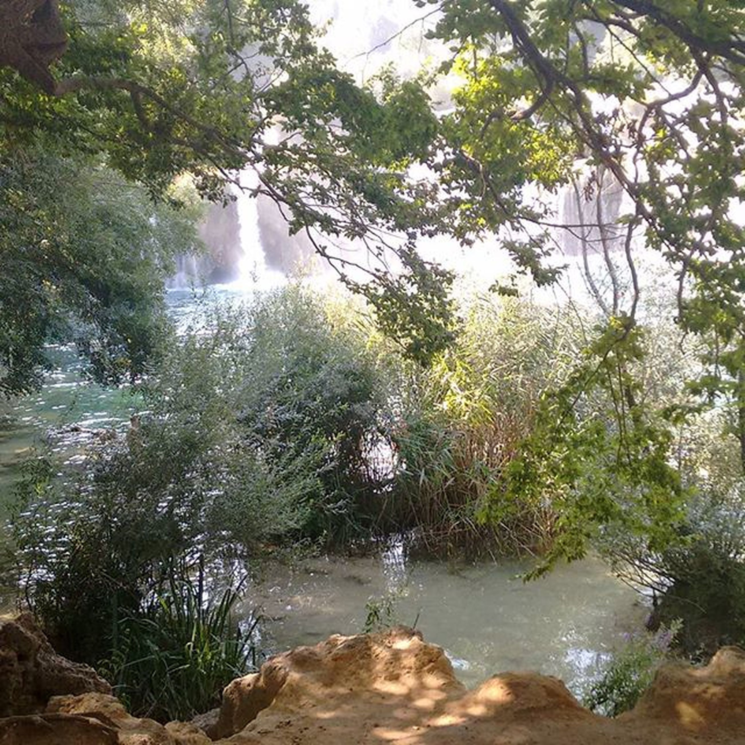 water, tree, beauty in nature, nature, scenics, tranquility, rock - object, flowing water, tranquil scene, flowing, stream, waterfall, forest, motion, river, idyllic, day, growth, outdoors, non-urban scene
