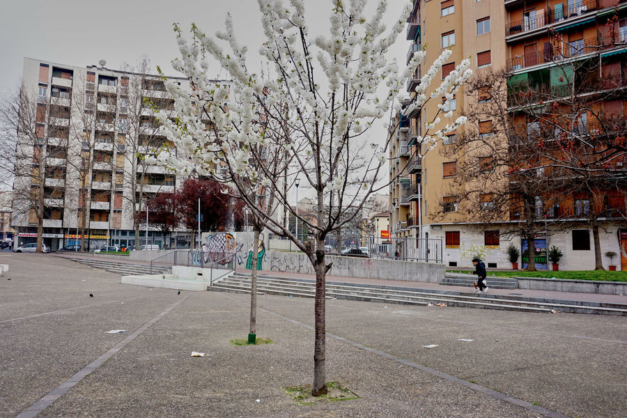 Architecture City Cityscape Concrete Jungle Flowers HDR Hinterland Incidental People Residential Structure Square Street Tree Under A Grey Sky Urban Landscape Urban Trees Urbanphotography White Flower