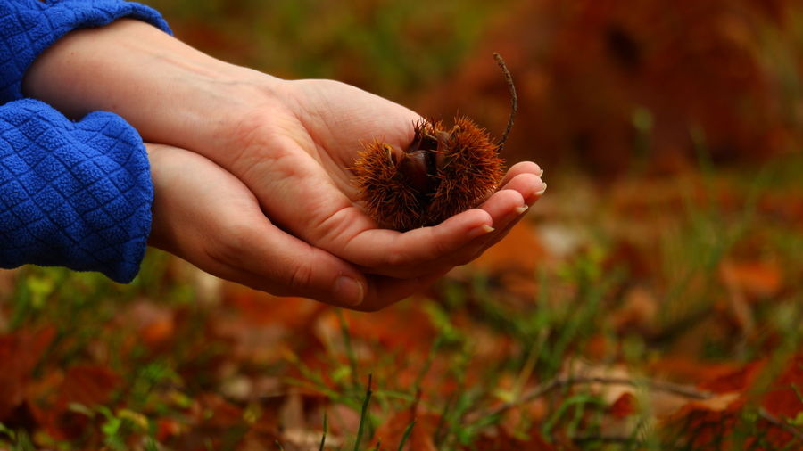 Chestnuts Human Hand Autumn Close-up EyeEmNewHere Autumn Mood My Best Photo