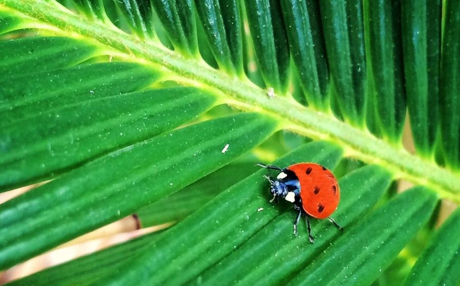 Poriolet. Ladybird Red Green Nature EyeEm Nature Lover IPhone IPhoneography Menorca Eyem Best Shots Eye4photography