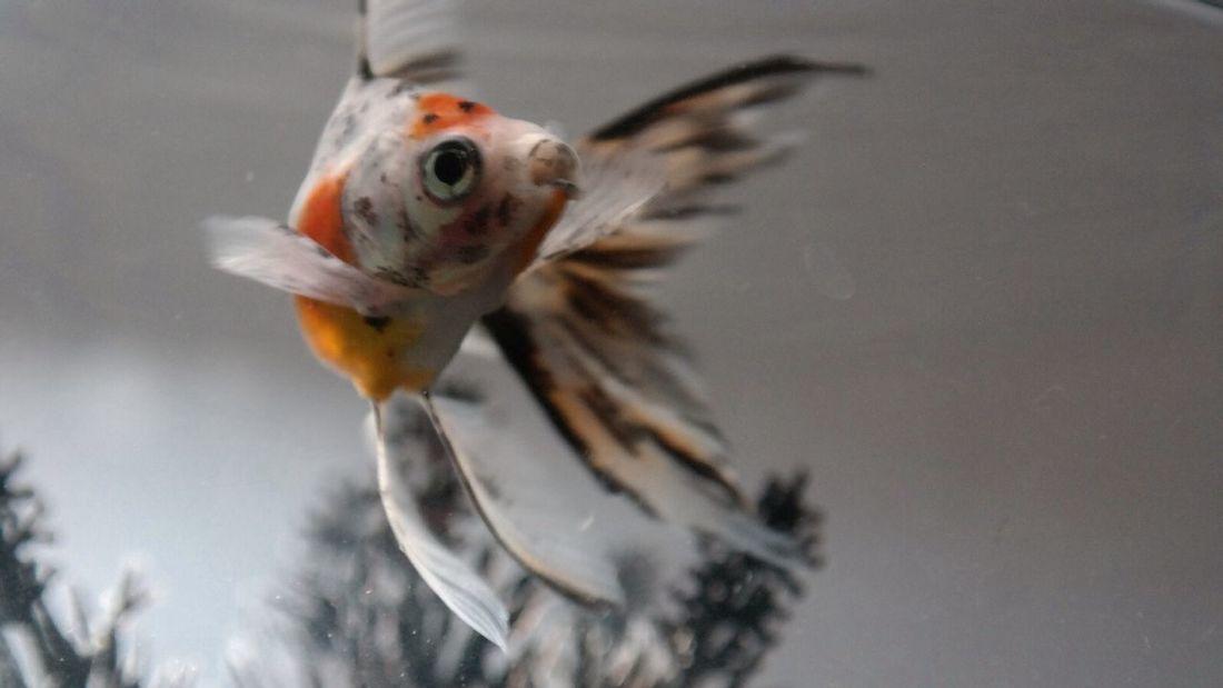 Fish Water Hello World Enjoying Life