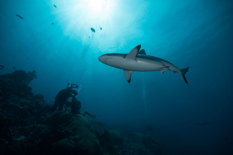 Low Angle View Of A Shark And Scuba Divers