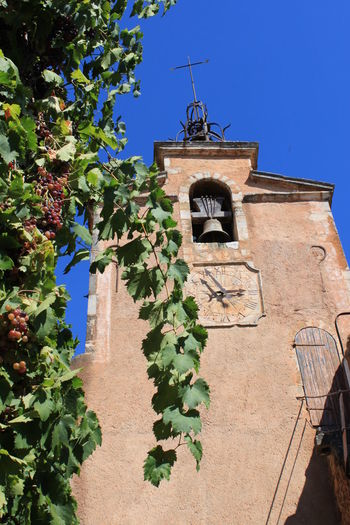 Architecture Building Exterior Clear Sky Grapes Grapes Nature Photography Grapes On The Vine Grapes, Vineyard, Wine, Winery, Soft, Outdoors Provence Roussillon Sunlight Vaucluse Wine
