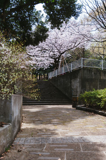 Akatsuka Park, Tokyo. Sakura Season 2016. Arch Architecture Branch Bridge - Man Made Structure Building Exterior Built Structure Day Diminishing Perspective Footpath Growth No People Park - Man Made Space Pathway Railing Sakura Steps Sunlight The Way Forward Tree Vanishing Point Walkway
