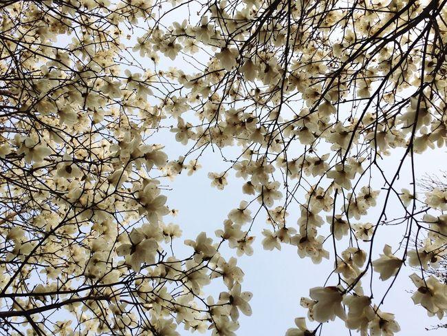 春暖花开 Hi!