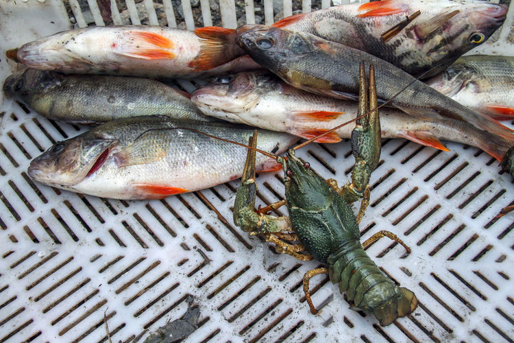 High angle view of seafood in basket