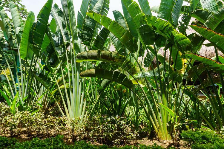 Plants growing in farm