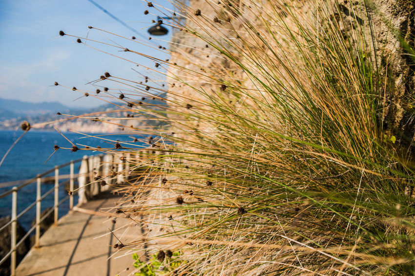 Grass Hiking Nature Porto Pidocchio (Liguria) Rock Formation Travel Vacations Wall Adventure Dry Grass Fence Horizon Over Water Liguria Mountains No People Outdoors Port Punta Chiappa Railings Rock - Object Sea Sky Water