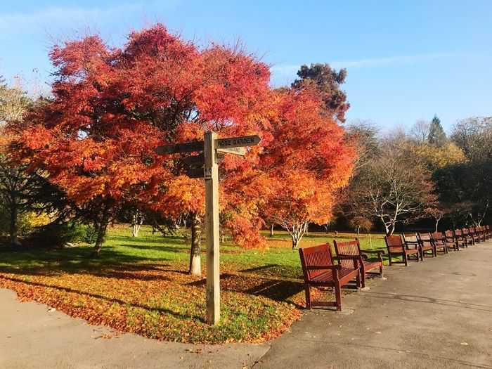 Autumn Cardiff Autumn colors Tree Plant Sky Nature Sunlight Outdoors Day Park Beauty In Nature No People Orange Color Growth