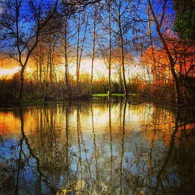 Welcome to Heaven. The flooded #Maraispoitevin 4/6. Good evening ☺ Maraispoitevin