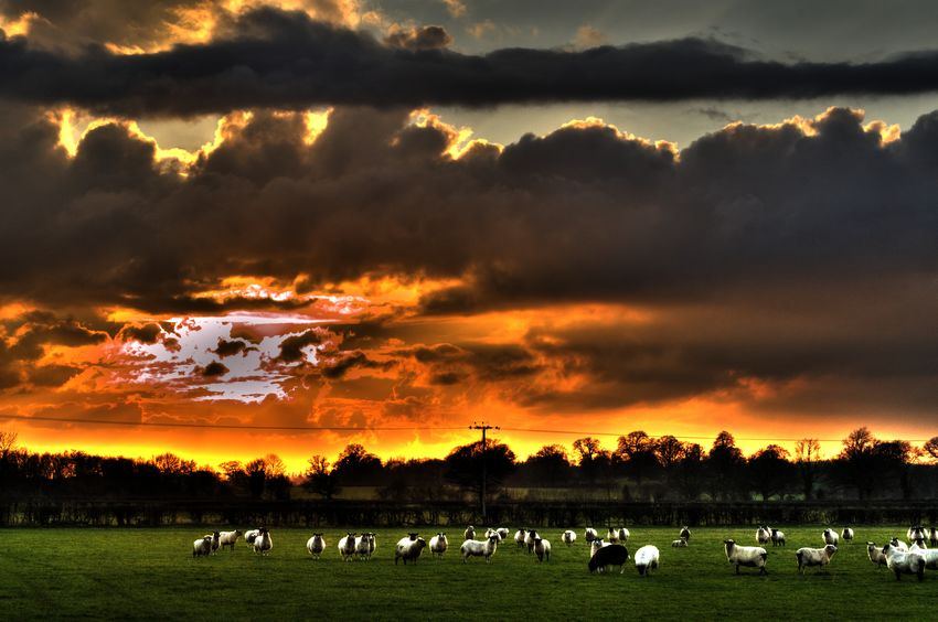 Amazing sunset colour Countryside England Sheep Edit Junkie Extreme Edit Fields Check This Out Shadows & Lights Beautiful Nature Creativity Contrast Colors