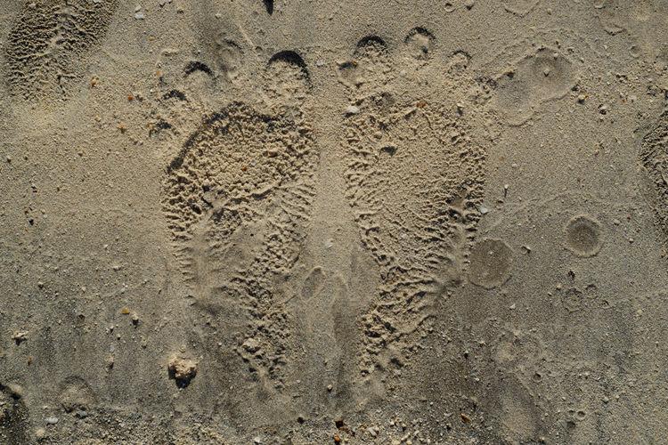 Backgrounds Beach Close-up Day Foot FootPrint Fun Nature Paw Print Sand Textured