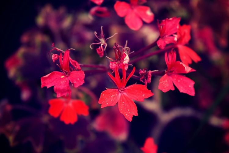 Flower Petal Growth Beauty In Nature Nature Red Fragility Freshness Flower Head Plant Focus On Foreground Day Outdoors Close-up Blooming No People Water