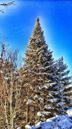 Showcase: February -38 C Very Cold Morning Beautiful Nature Trees Outdoors Photograpghy  Winter Scene Enjoying Life Taking Photos Smartphonephotography