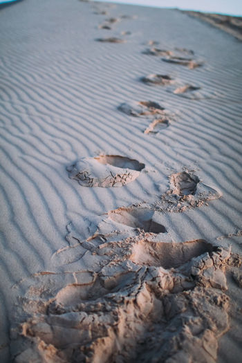 Footprints in the sand dunes at sunset,Vietnam High Angle View No People Sand Land Nature Day Beach Water Tranquility Animal Wildlife Beauty In Nature Outdoors Animal Pattern Selective Focus Sea Animals In The Wild Animal Themes Winter Dune Sunset FootPrint Desert Landscape Nature Adventure Sunrise Foot Dry Travel Walk Sahara Journey Panoramic Gold Sunlight Exploration Hot Summer barefoot Nobody Imprint Footsteps Shore Middle East Scenics Steps Step Loneliness Footmarks
