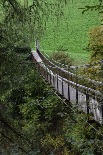 suspension bridge Beauty In Nature Bridge Connection, Context, Correlation, Connexion, Coherence, Cohesion Day Green Color Growth Hanging Out Nature No People Outdoors Suspension Bridge Tree
