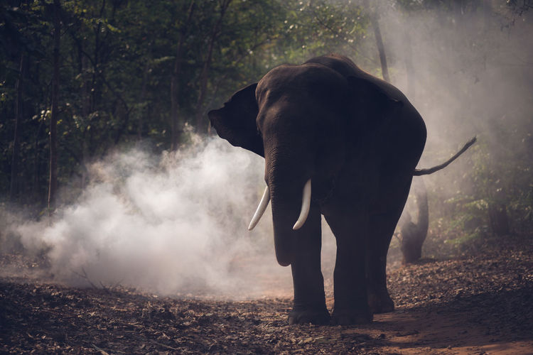 Elephant standing by smoke in forest