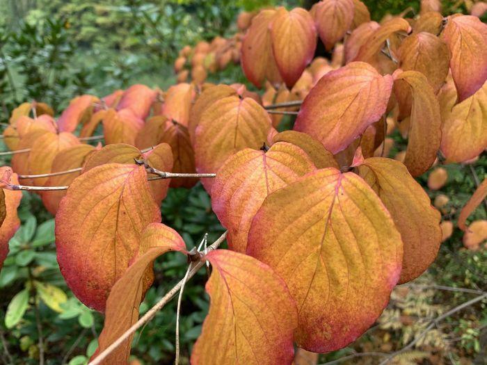 Close-up of orange fruit on plant during autumn