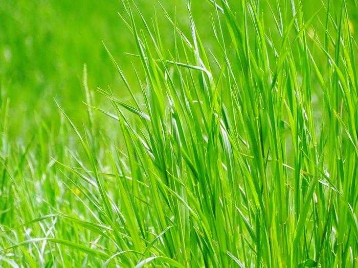 Full frame shot of fresh green field
