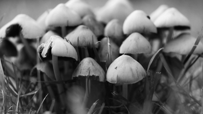Monochrome Photography Mushroom Focus On Foreground Growth Close-up Fungus Nature Growing Outdoors Wilderness Uncultivated No People Toadstool NX1 Samsungphotography