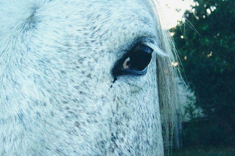 Soft sentients, silent sentiments. Outdoors Nature Close-up Horse Photography Eye Sentimental Grunge Aesthetic Melancholic Grain First Eyeem Photo