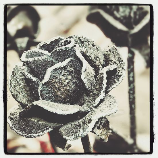 Roses Black Metal Smith
