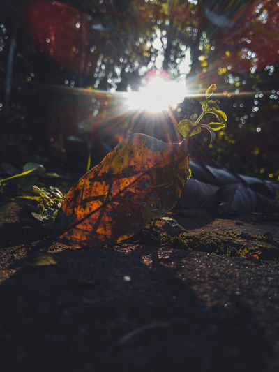 Close-up of sun shining on land