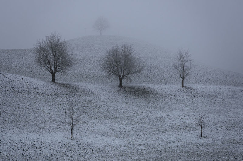 Clear hierarchy Snow Trees Hill Hierarchy Landscape Fog Nature Tranquil Scene Tranquility Plant Cold Temperature Winter Outdoors Environment Beauty In Nature Scenics - Nature No People