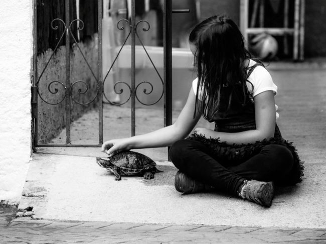 Turtle Girl Portrait Portrait Of A Girl Check This Out EyeEm Gallery Bnw_collection Bnw_captures Bnw_life Mascota Pet Photography  Pet Portrait Pet Black Hair